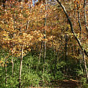 Merwin Autumn Trail Bend Art Print
