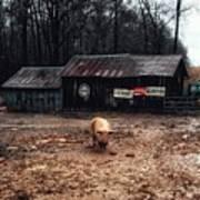 Messy Pig Farm Lot Art Print