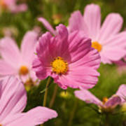 Mexican Aster Flowers 2 Art Print