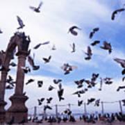Mexican Pigeon Ruins Art Print