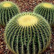 Mickey Mouse Barrel Cactus Art Print