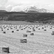 Mid June Colorado Hay  And The Twin Peaks Longs And Meeker Bw Art Print