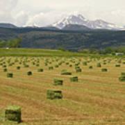 Mid June Colorado Hay  And The Twin Peaks Longs And Meeker Art Print
