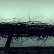Middlethorpe Tree In Fog Gray And Green Panorama Art Print