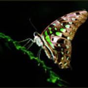 Midnight Butterfly Art Print