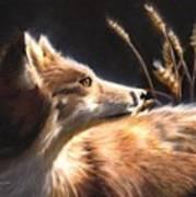 Midnight Fox Art Print