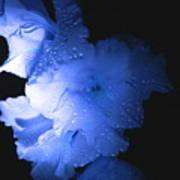 Midnite Aroma Blue Art Print
