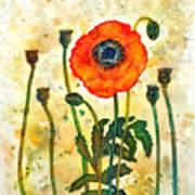 Midsummer Poppy Art Print