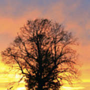 Mighty Oak At Sunset Art Print