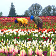 Migrant Workers In The Tulip Fields Art Print