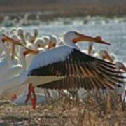 Migrating Pelicans  Art Print