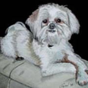 Miki Dog Art Print