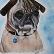 Millie The Pug 2016 Art Print