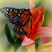 Mingle With A Monarch Art Print