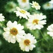 Mini Spring Daisy's Art Print