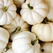 Mini White Pumpkins Art Print
