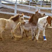 Miniature Horses Art Print