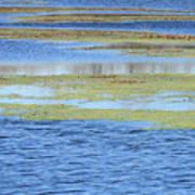 Brazos Bend Wetland Abstract Art Print
