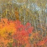 Minnesota Autumn 55 Art Print