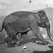 Minnie The Elephant, 1920s Art Print