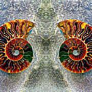 Mirrored Ammomite - 8305 Art Print