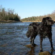 Mississippi River Dog On The Rocks Art Print