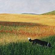 Missy In The Field Art Print