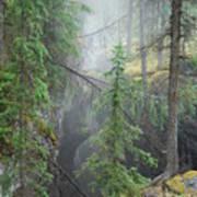 Mist Forest Art Print