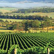 Misty Morning In Yarra Valley Vineyards Near Healesville, Victoria, Australia Art Print