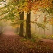 Misty Pathways  Art Print