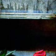 Misty Rose Art Print
