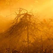 Misty Swamp Sunrise Art Print