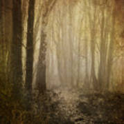Misty Woodland Path Art Print by Meirion Matthias