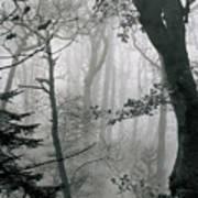 Misty Woods, Juniper Art Print