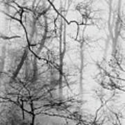 Misty Woods, Whitley Mill Art Print