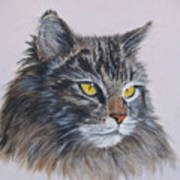 Mitze Maine Coon Cat Art Print