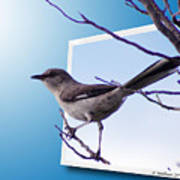Mockingbird Branch Art Print
