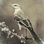 Mockingbird Art Print