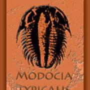 Modocia Typicalis Fossil Trilobite Art Print