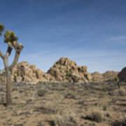 Mohave Desert Art Print