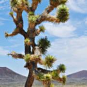 Mojave Joshua Tree Art Print