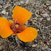 Mojave Orange Art Print