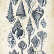 Mollusks - 1842 - 17 Art Print