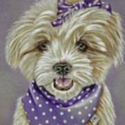 Molly The Maltese Art Print