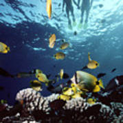 Molokini Snorkeling Couple Art Print