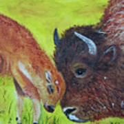 Mom And Baby Buffalo Calf Art Print
