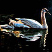 Mom And Baby Swan Art Print