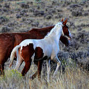 Mom And The Filly Leaving Art Print
