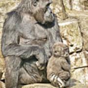 Momma And Baby Gorilla Art Print