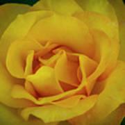 Moms Yellow Rose Art Print